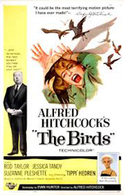The Birds movie | Alfred Hitchcock